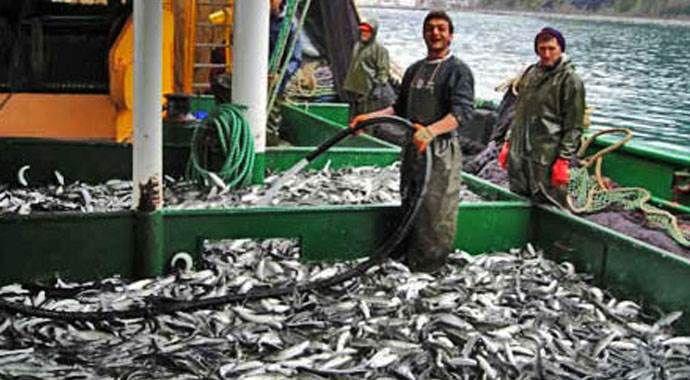 Marmara ve Karadeniz'de balık bolluğu