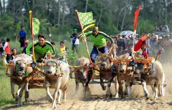 Bufalo yarışı