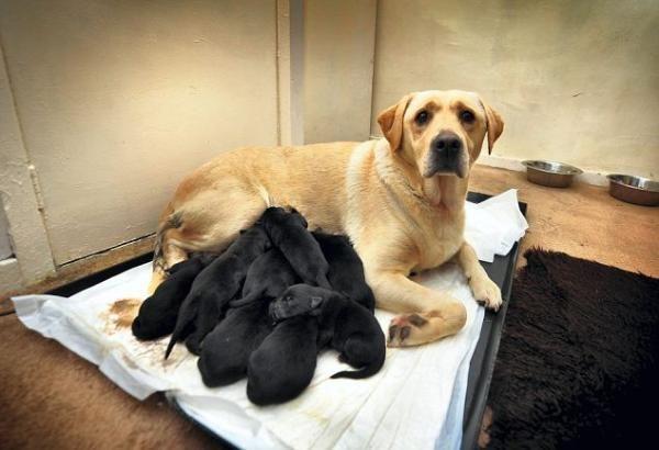 Anne sarı, yavrular siyah