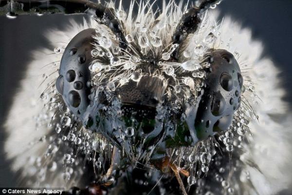 Böceklerin dünyasından çarpıcı fotoğraflar
