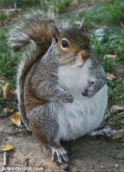 Hayvanlar da obez olursa
