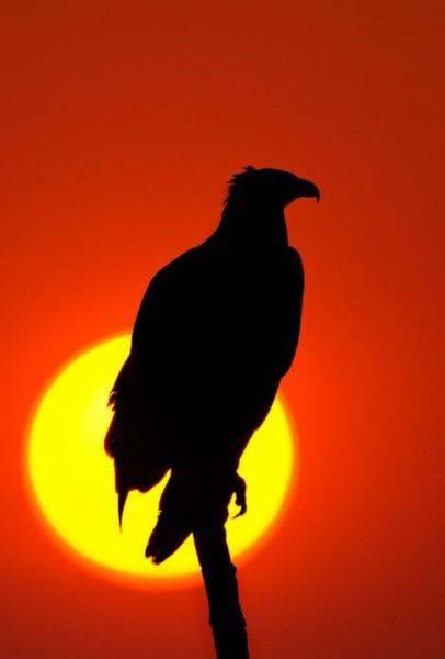Kara Afrika'dan aydınlık fotoğraflar