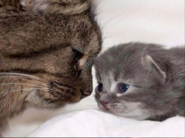 Anne ve yavruları