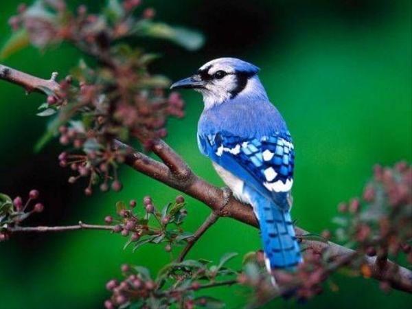 Birbirinden şahane kuş türleri