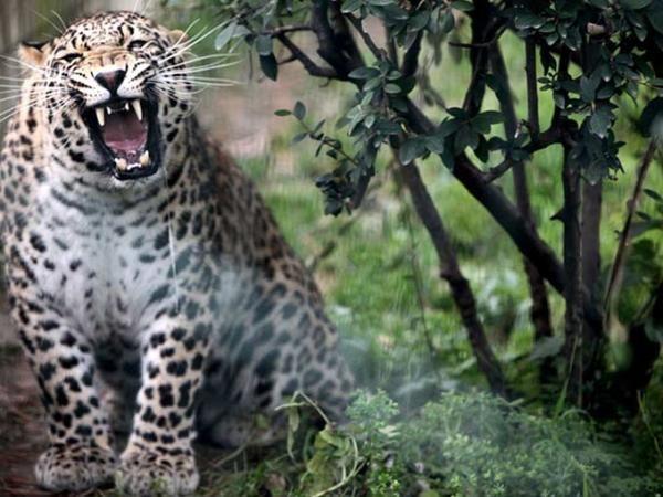 Afrika değil Bursa hayvanat bahçesi