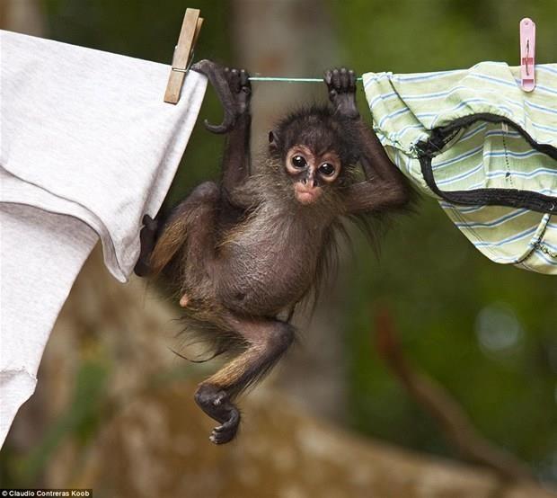 Sevimli hayvanları hiç böyle görmemiştiniz...