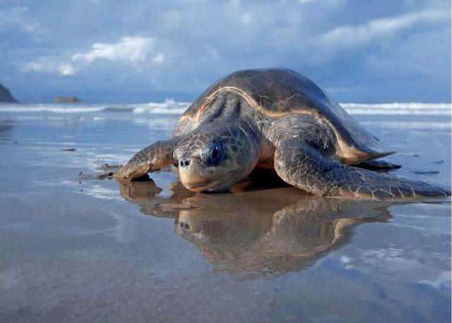 Deniz kaplumbağası 8 kişinin ölümüne sebep oldu