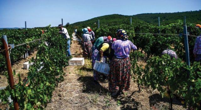 İsrail Türkiye'den tarım ürünleri ithalatını dondurdu