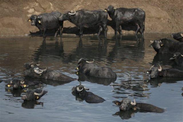 Fotoğrafı Gören Afrika Sanıyor ama Burası Balıkesir