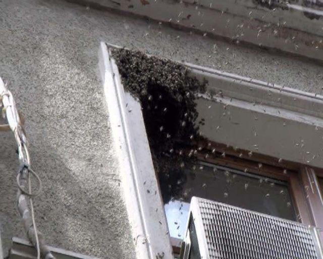 Taksim'de yüzlerce arı sokaktan geçenlere zor anlar yaşattı