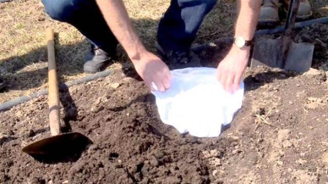 Toprağa iç çamaşırınızı gömün, bakın ne işe yarıyor!