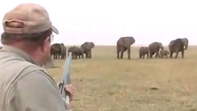 Fillerin intikamı acı oldu
