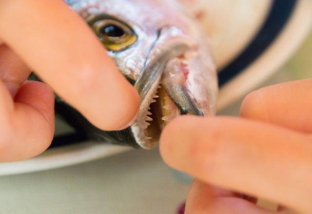 Lüfer balığının faydaları saymakla bitmiyor