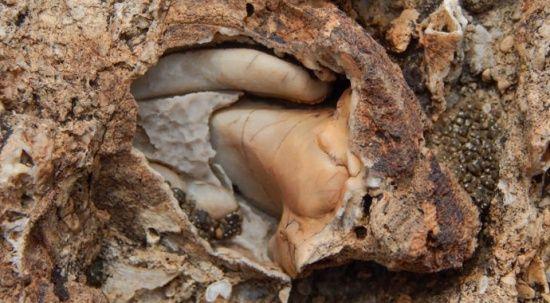 Doğa yürüyüşünde 98 milyon yıllık deniz canlısı fosil yatağı buldu