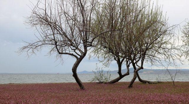 Kum Adası pembeye büründü