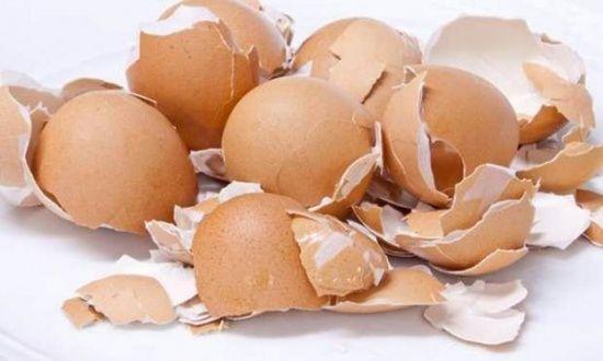 Kabuğunu atıyoruz ama bakın ne işe yarıyor! İşte yumurta kabuğunun faydaları