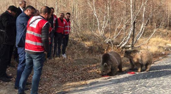 Bitlis'in maskotu ayılar kavurmayla besleniyor