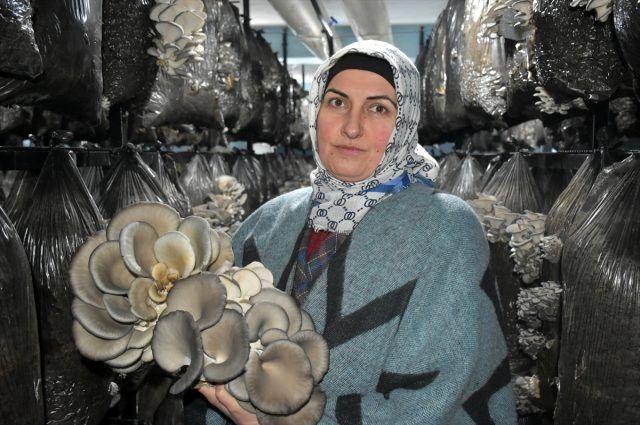 Ev temizliğinden kazandığı sermayeyle mantar üreticisi oldu