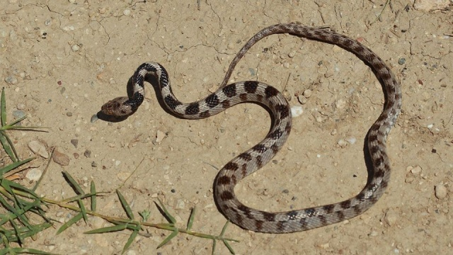 Profesörden 'yılanları öldürmeyin' uyarısı