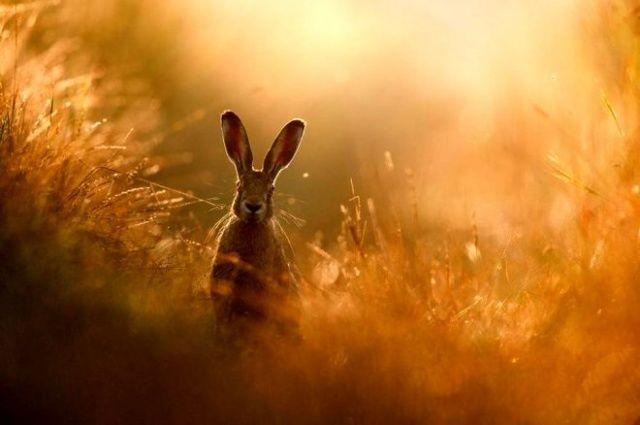 Görenler hangi hayvan olduğunu anlamakta güçlük çekti! En iyi doğa fotoğrafı seçildi