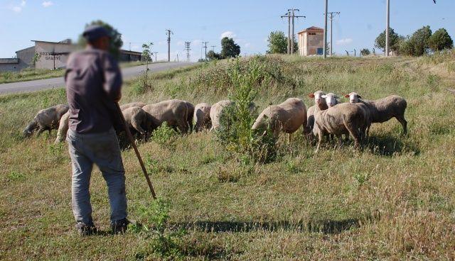 Koyunları otlatırken patlamamış top mermisi görünce şoke oldu