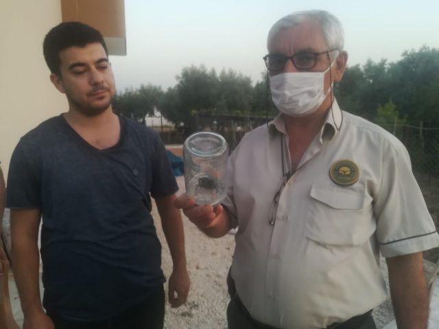 Nadir görülen geyik böceği Osmaniye'de ortaya çıktı