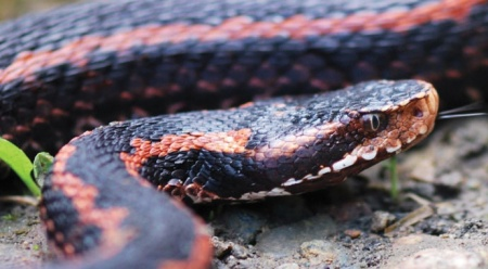 Yılanların son dönemde sıkça görülmesinin sebebini açıklandı