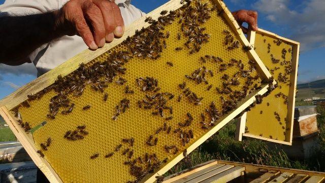 Arı kayıpları üreticiyi endişelendiriyor