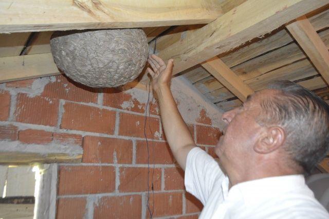 Çatı katında bir anda ortaya çıktı... Ev sahibi neye uğradığını şaşırdı!