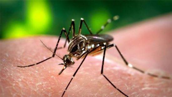 Sivrisinekler hep sizi mi ısırıyor? İşte sebepleri!