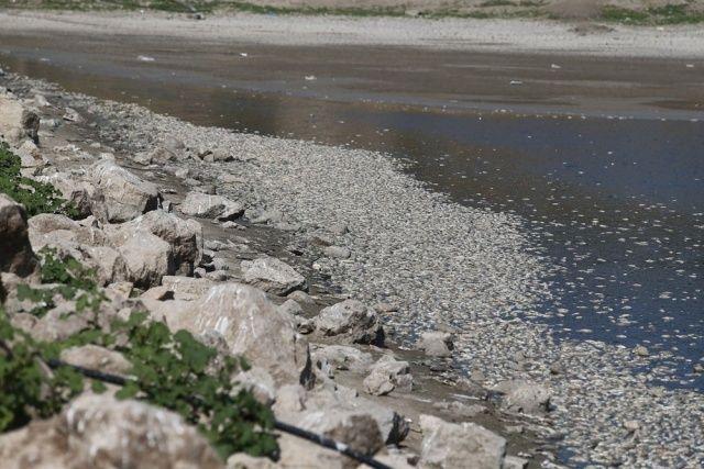 Bursa'da binlerce balık kıyıya vurdu