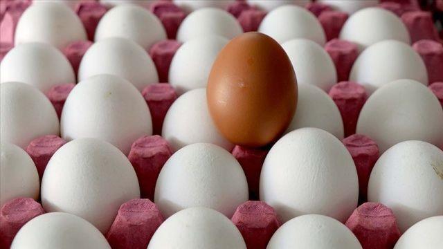 Yumurtada alarm zilleri çalıyor