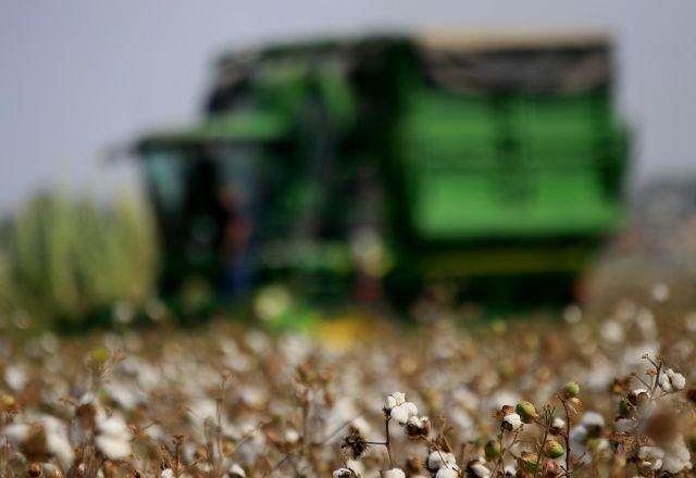 'Beyaz altın' pamukta hasat başladı
