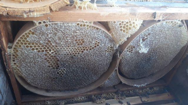 Koronavirüs nedeniyle kekik balına talep iki kat arttı