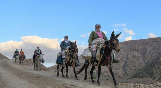 Berivanların katır sırtında zorlu yolculuğu