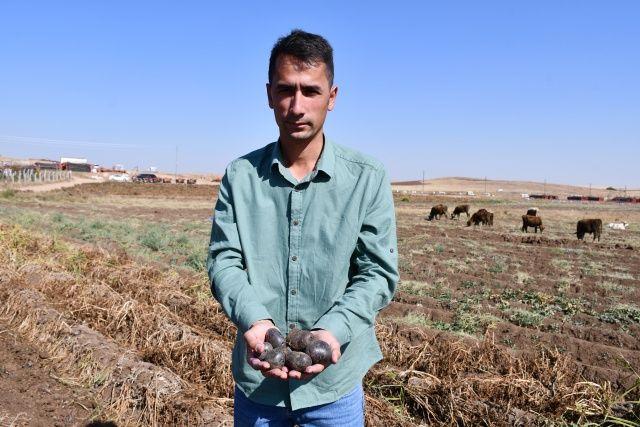 Yerli ve mor! Türkiye'de ilk defa üretildi