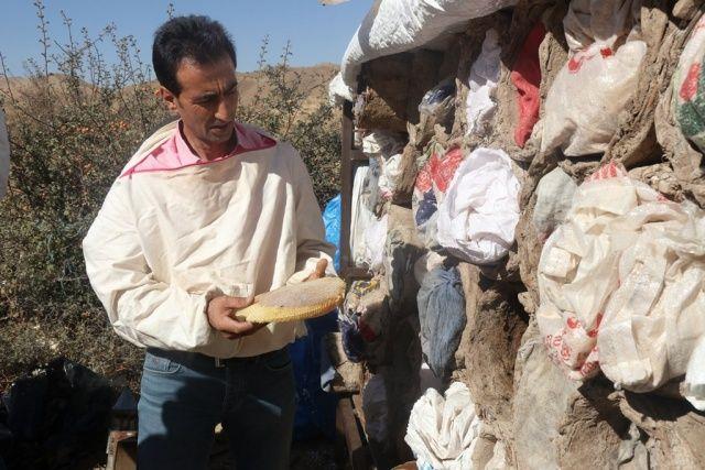 Dünyaca ünlü, hasadına başlandı! Kilosu 250 lira....