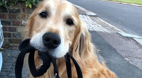 Hayvanlarda ilk kez! Köpek, beynindeki tümörden radyoterapiyle kurtuldu