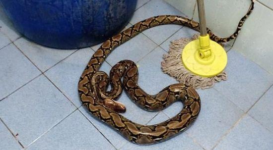 Tuvalette yılan ısırdı