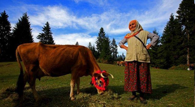 Doğu Karadeniz'de yaylacıların göç yolculuğu sürüyor