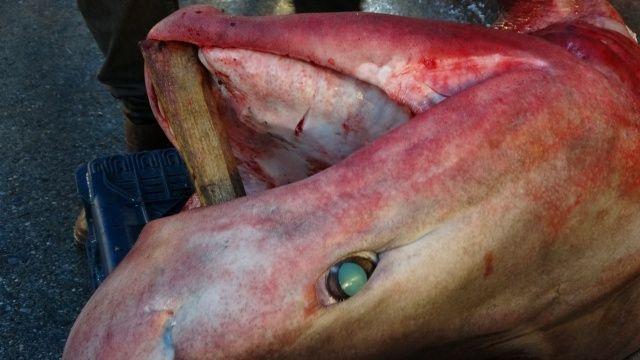 Bu balığı gören dönüp bir daha baktı, fotoğraf çekmeden gidemedi