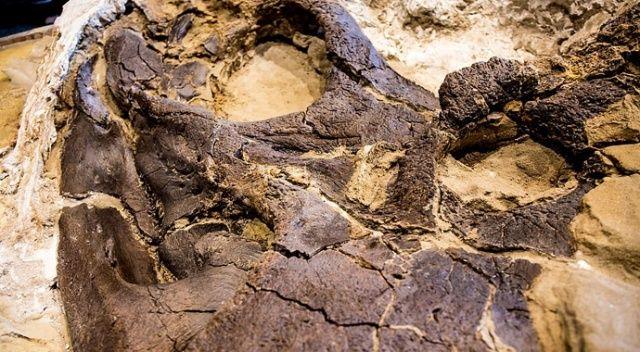 ABD'de boğuşurken ölen dinozor fosilleri bulundu