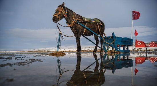 Çıldır Gölü'nde masalsı atlı kızak gezintileri başladı