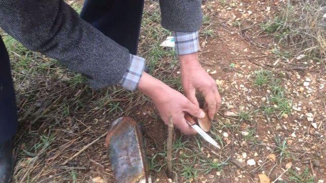 Kesilmiş ladin ağacı kökünden toplayıp, kilosunu 30 liradan satıyorlar