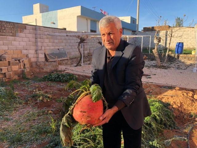 Mardin'de 8 kiloluk turp ilgi odağı oldu