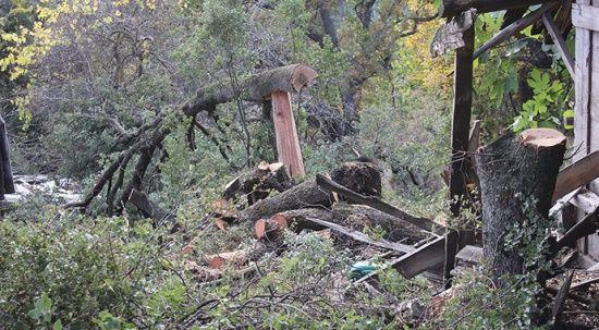 Kardeşlerin ağaç kesme tartışması aile dramına döndü