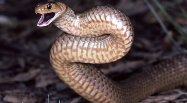 Sosyal medyada tartışma: Fotoğraftaki yılan nerede?