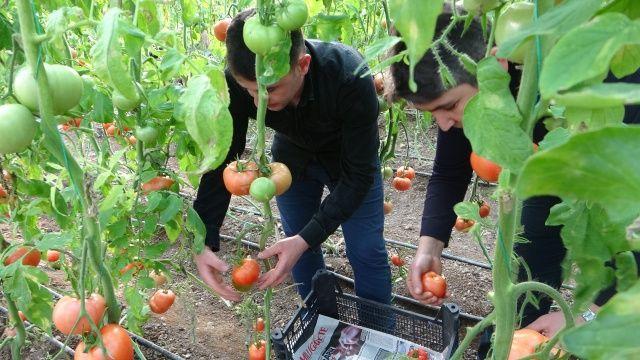 Sağlıklı beslenmek isterken kendi işlerinin patronu oldular