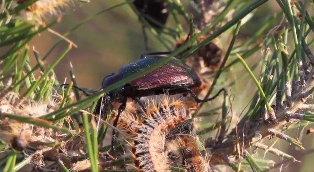 Terminatör böcekler iş başında! Mücadele başladı