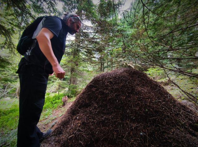 Görenler şaşıp kalıyor! Karınca yuvalarının boyu 1 metreyi buluyor